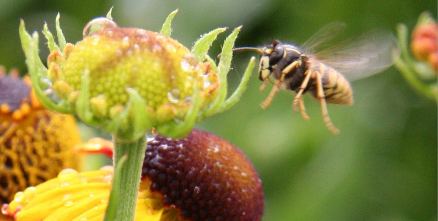 attracting insects into your garden at Larch Cottage Nurseries