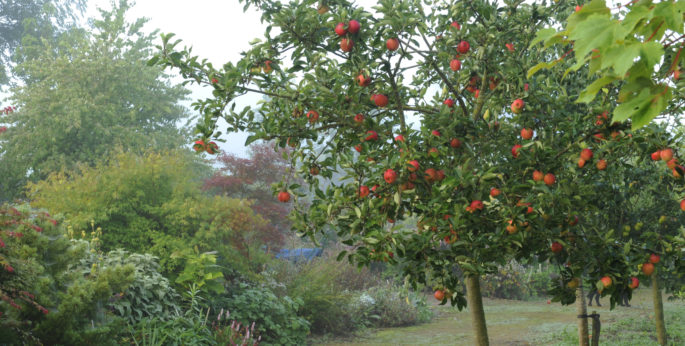 The Best Time Of Year To Plant Fruit Trees In The Uk