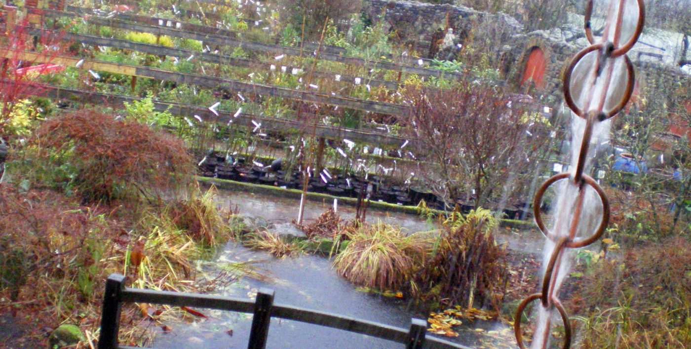 Storm Desmond at Larch Cottage Nurseries